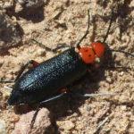 Beetle. Photo by Justin Bowen